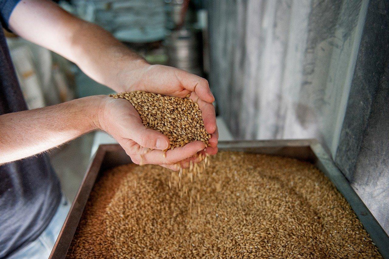 ชา Barley บาร์เลย์ Mugicha
